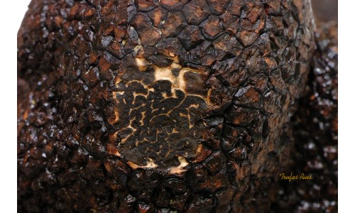 Culture de la truffe noire, l'origine