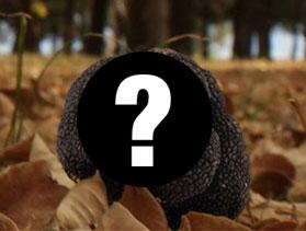 Preguntas sobre la trufa fresca